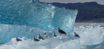 Maria Grazia Bellinazzi – Groenlandia