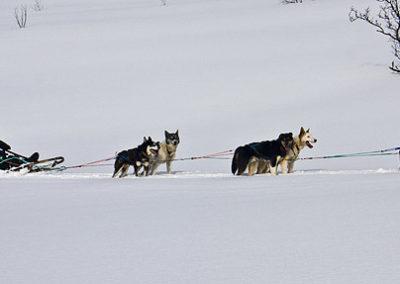 lofoten-paula-valle-tierras-polares trineo de perros noruega