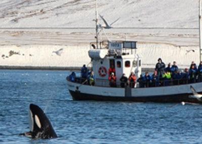 orche - Snaefellsnes - islanda